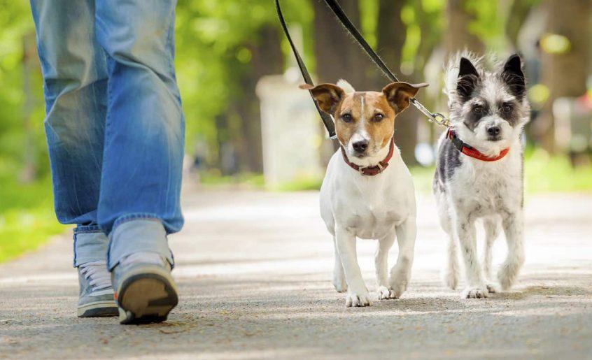 Hundebetreuung in Köln