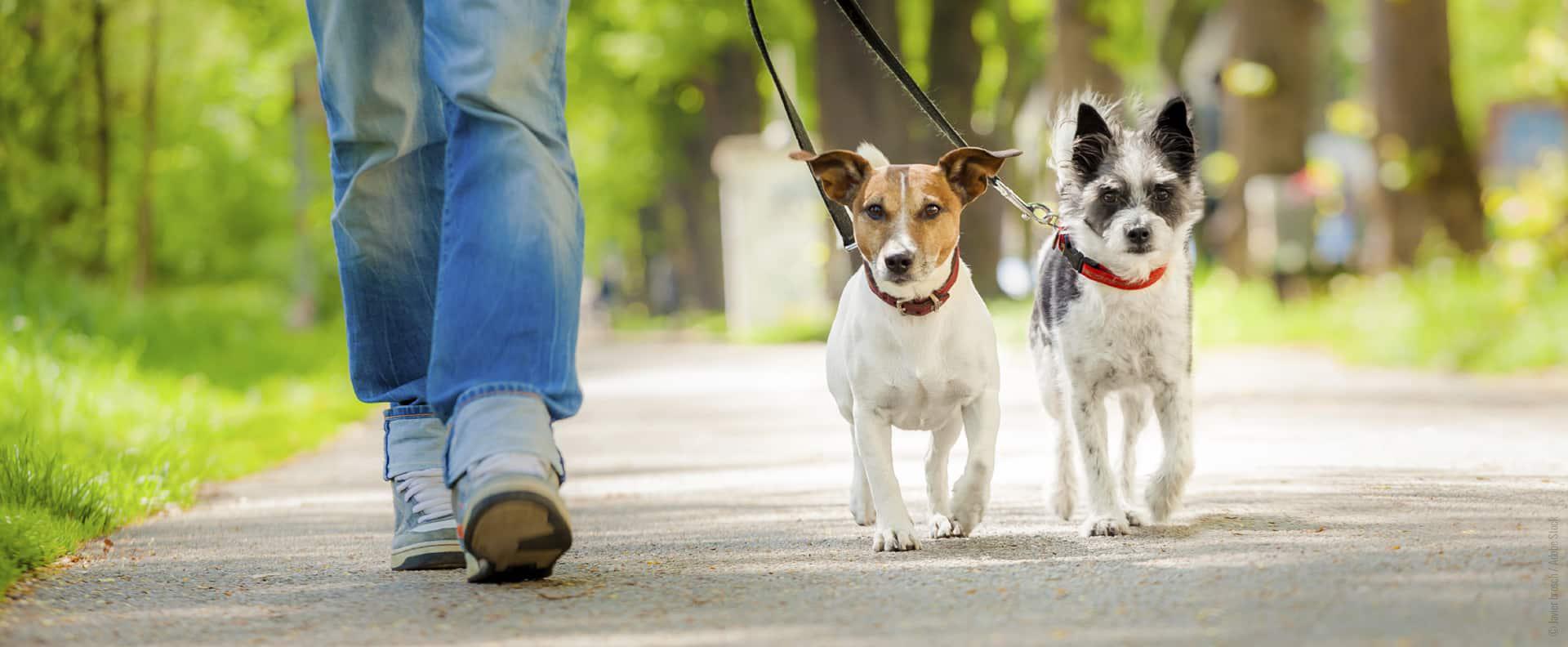 Gassi-Service für Hunde in Köln